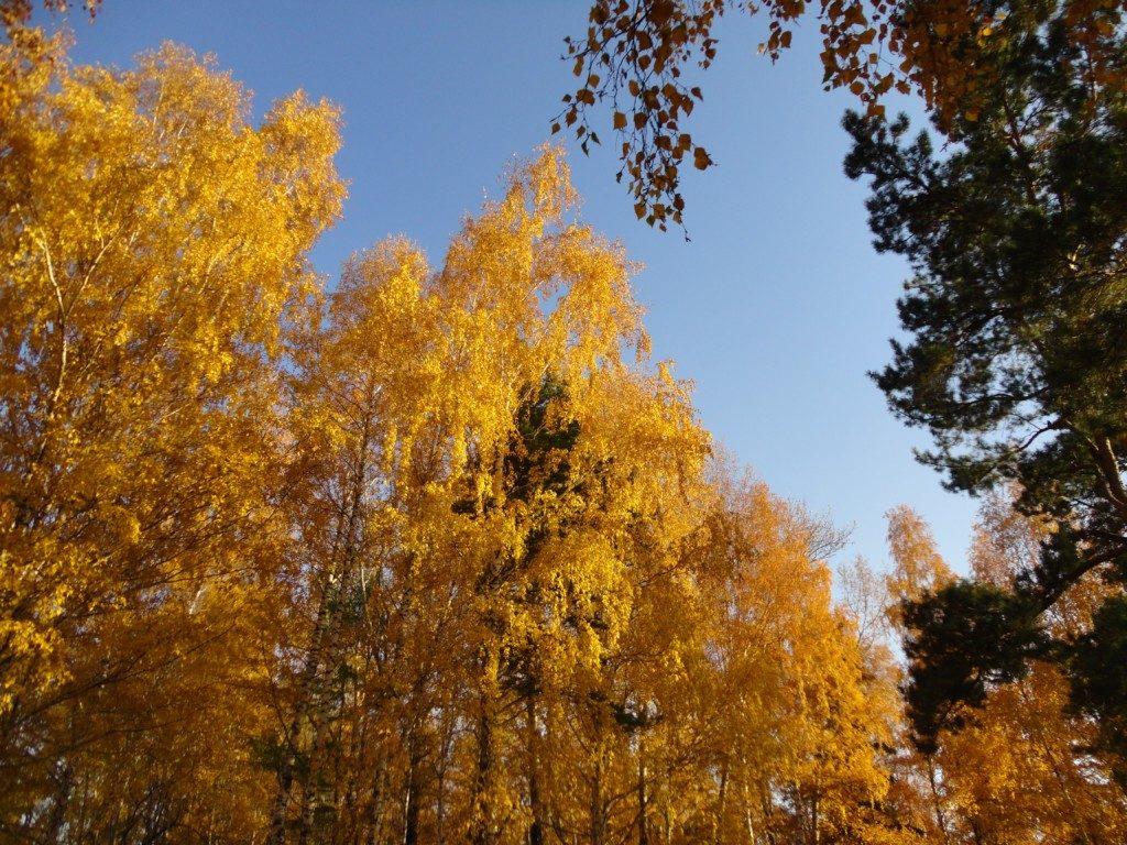 Иван Узанов Осень золотая